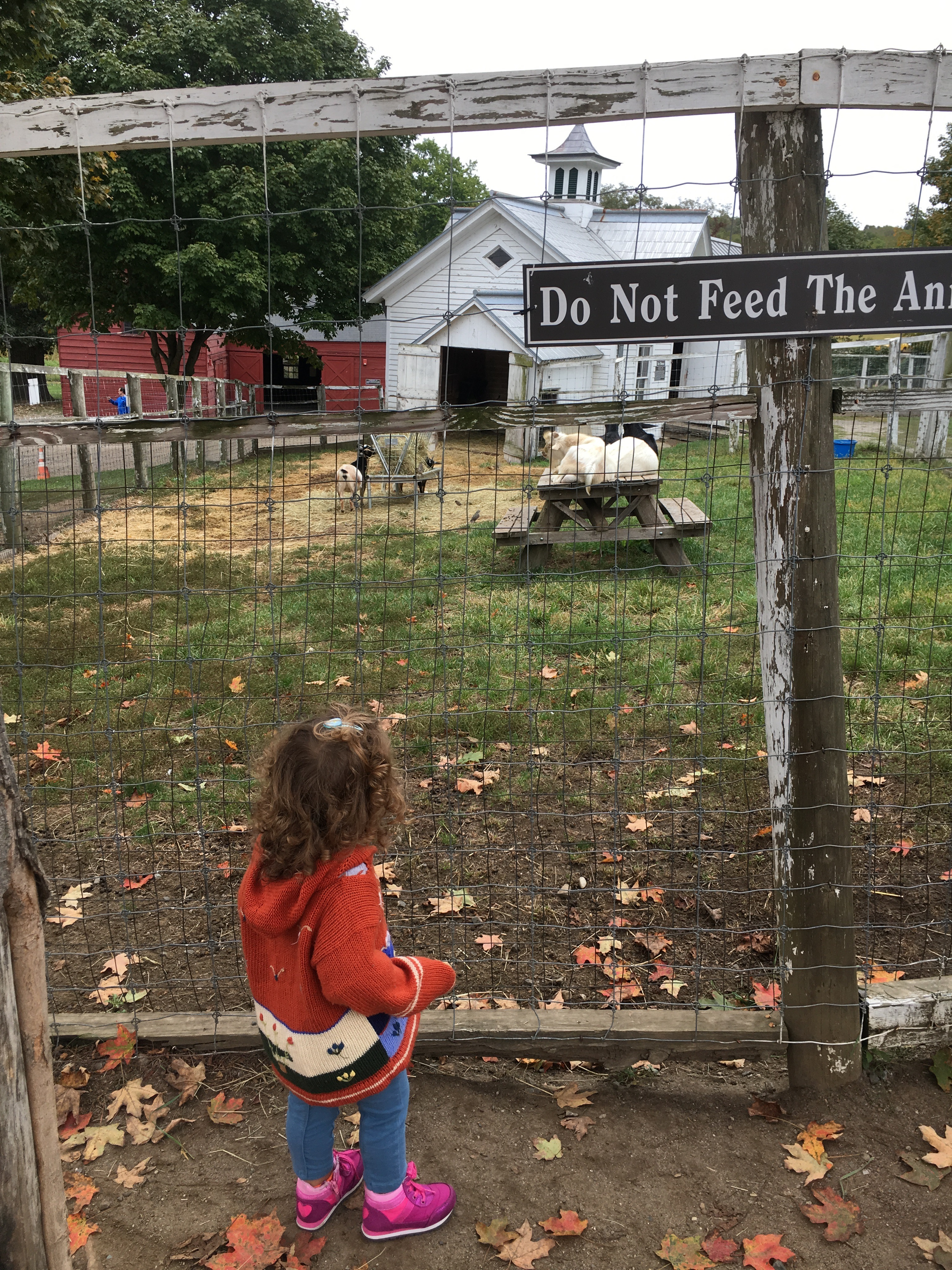 goats at muscoot farm