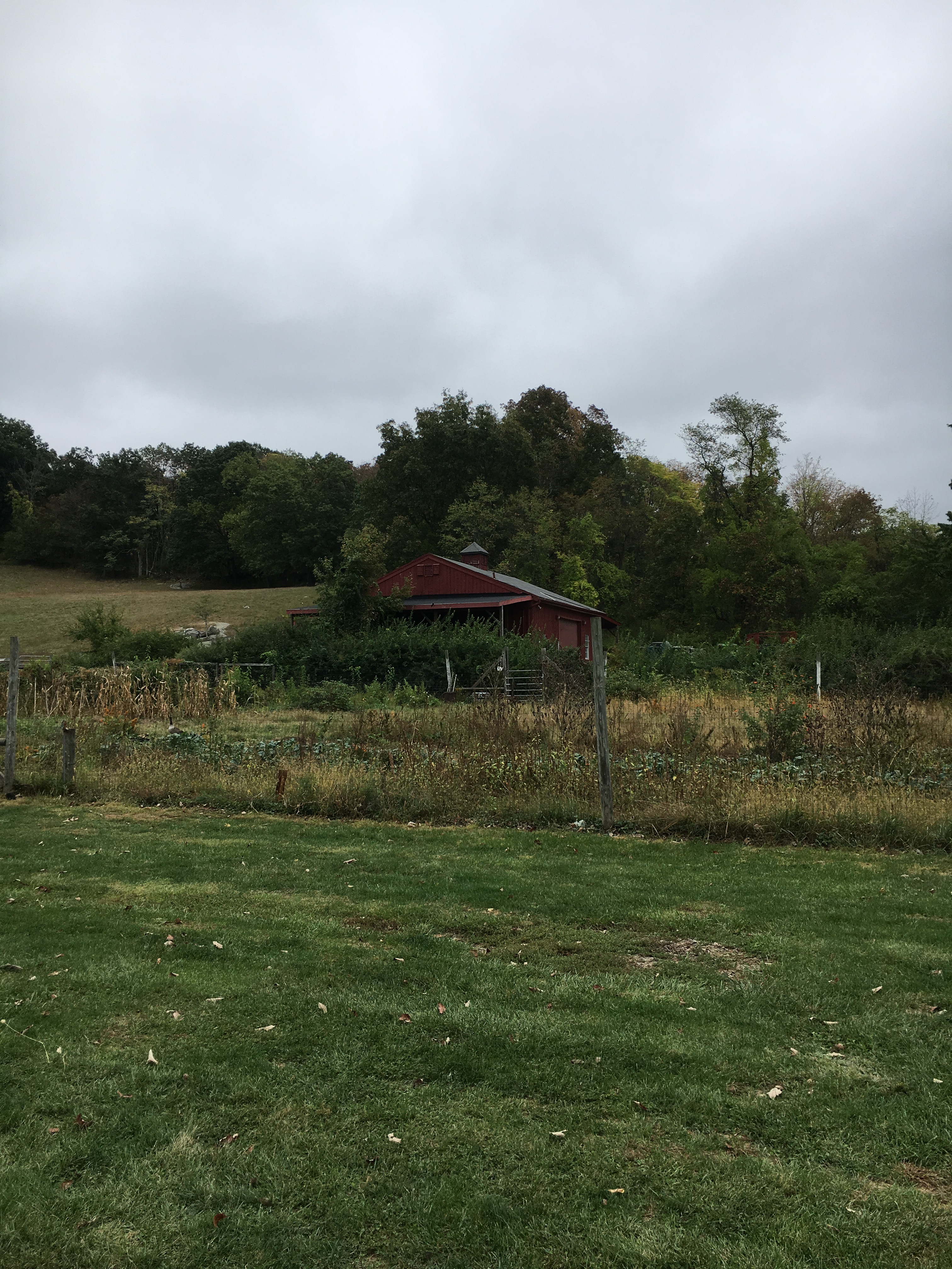 visit to muscoot farm