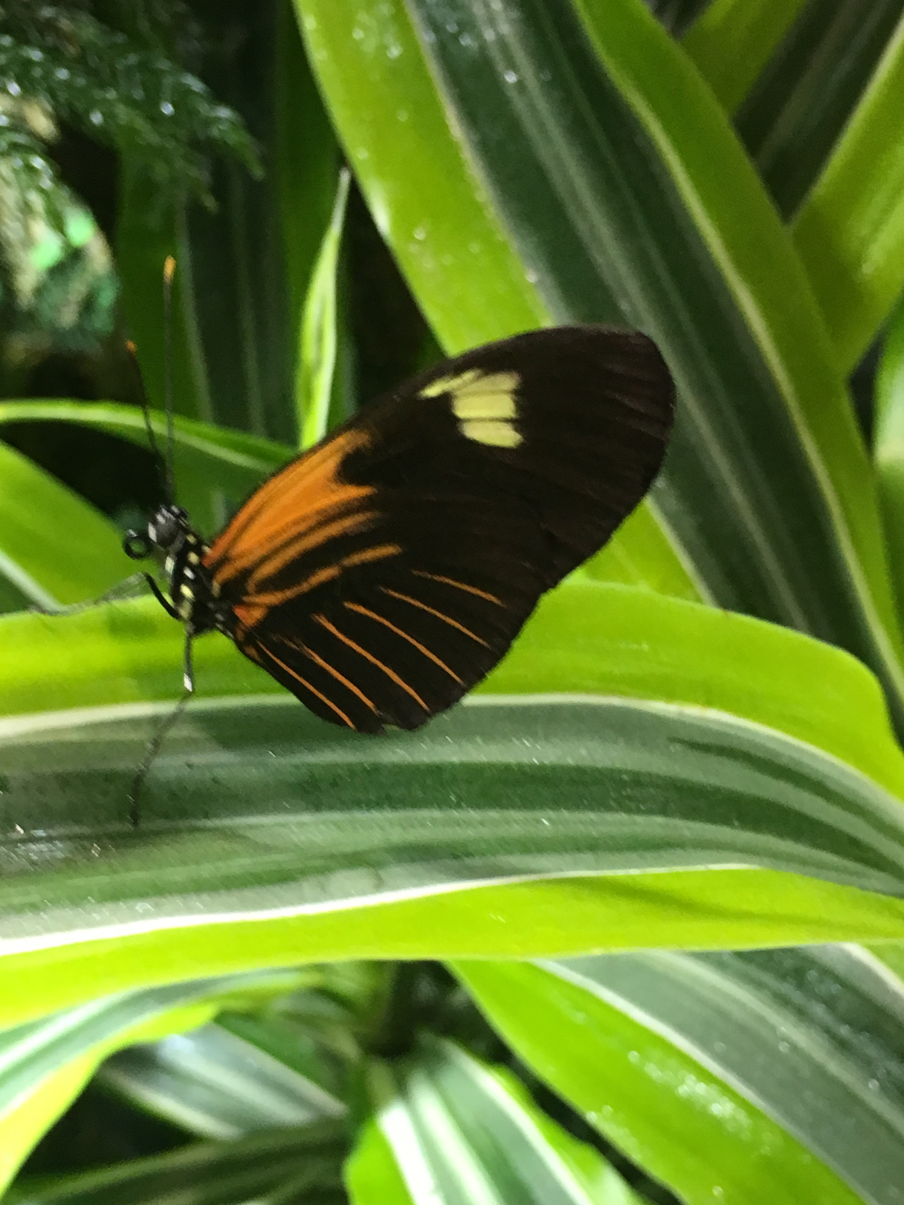 butterfly conservatory at american museum of natural history
