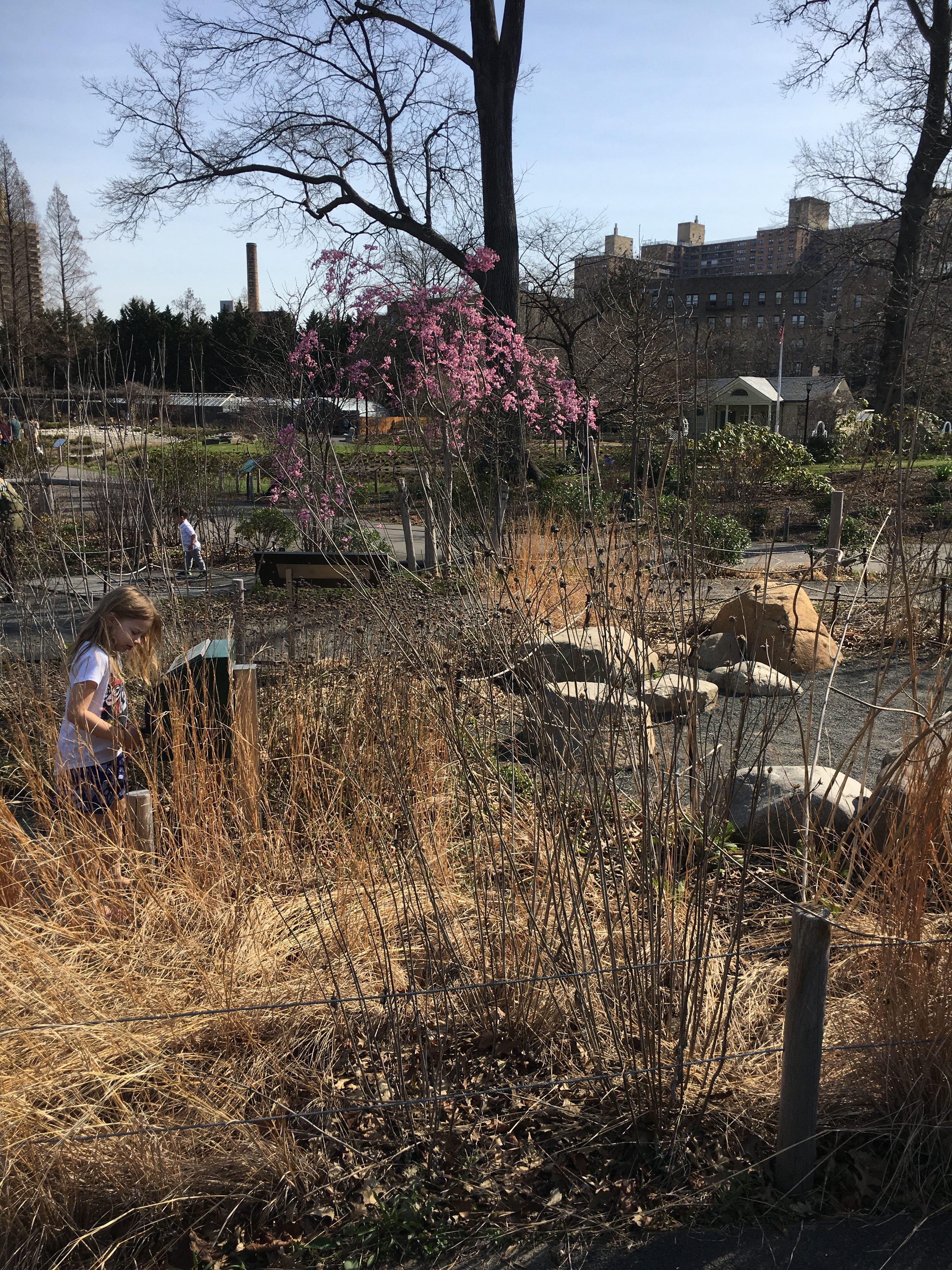 kids garden at the brooklyn botanic garden