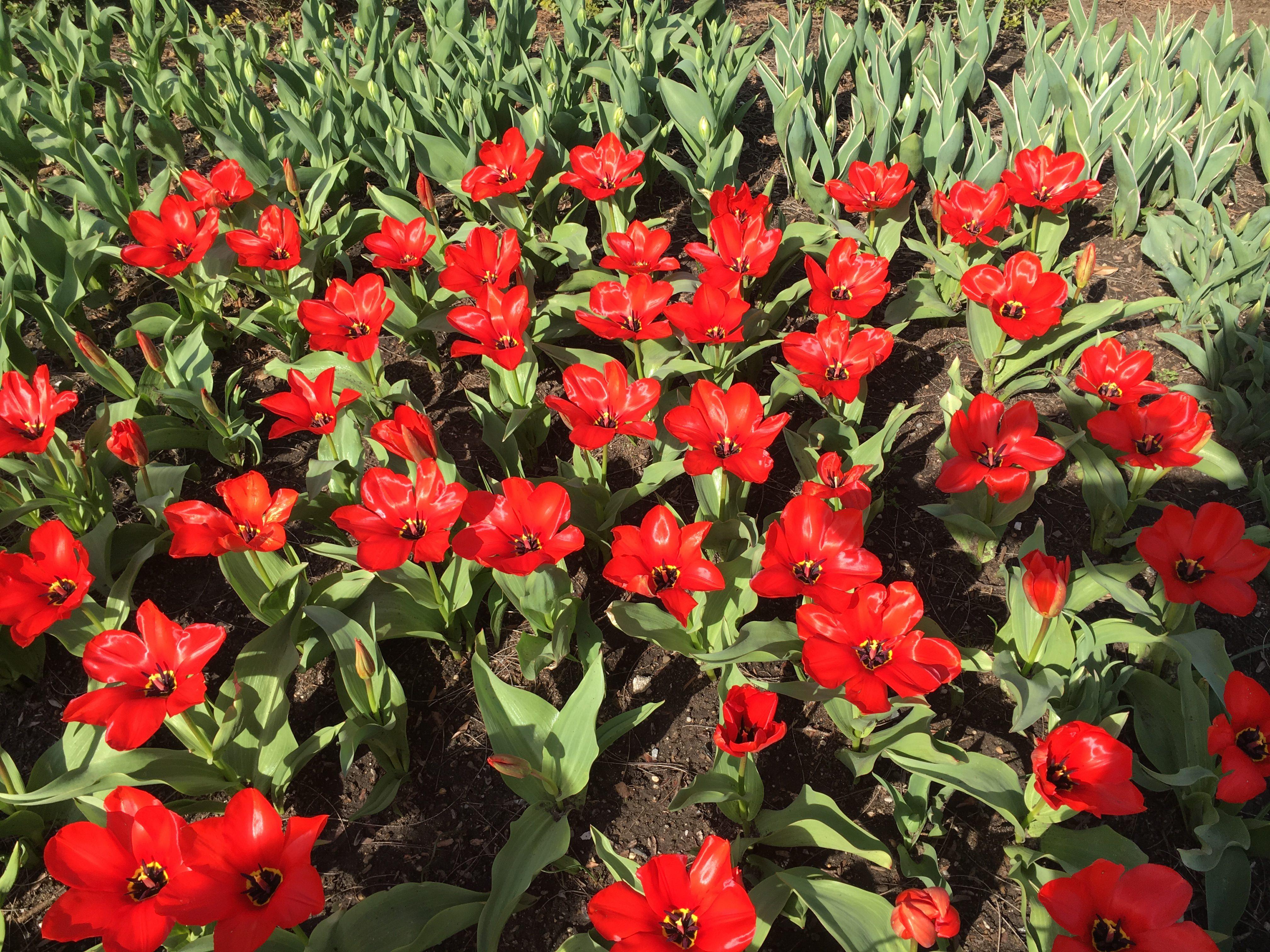 flowers at brooklyn botanic garden