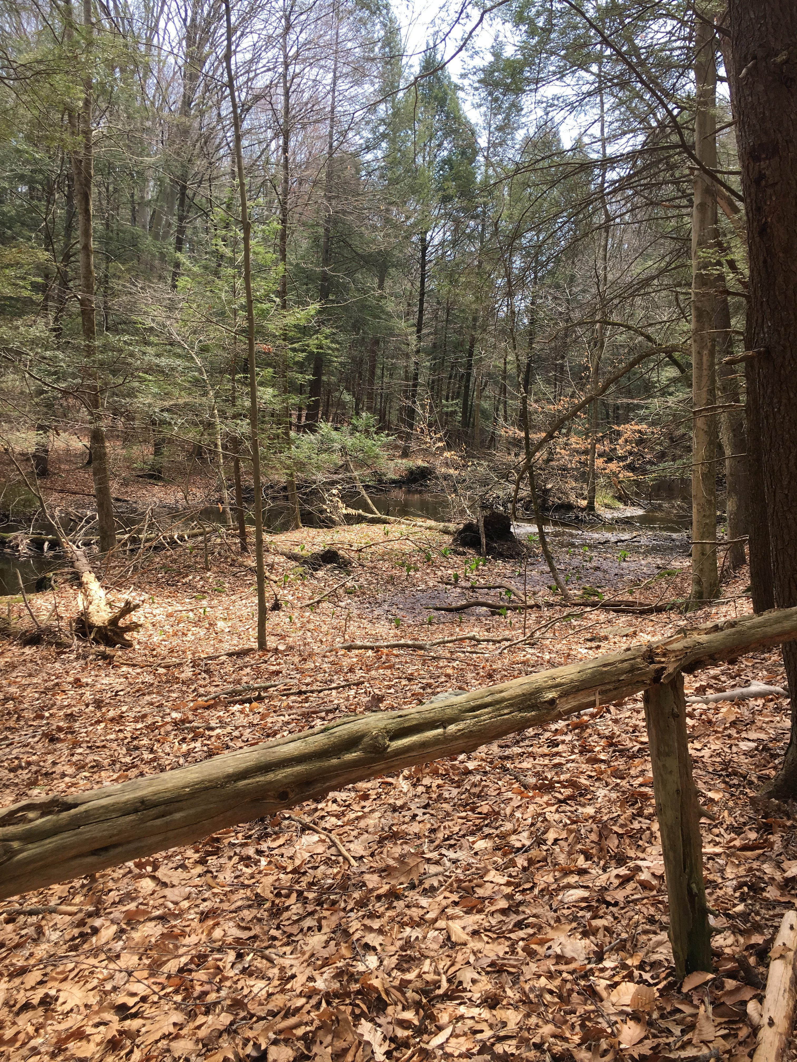 Hiking the Mianus River Gorge Preserve with Kids