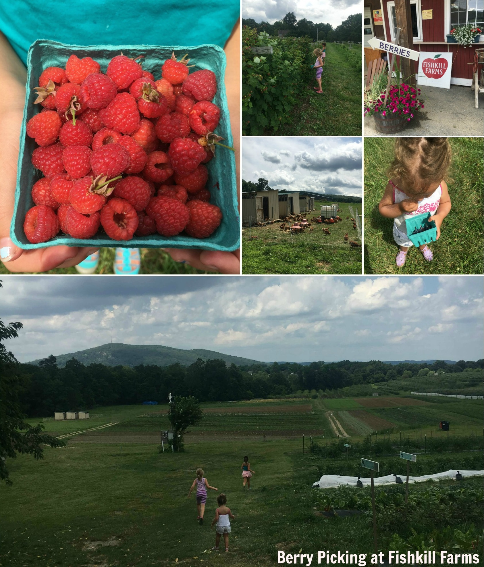 fishkill farms berry picking