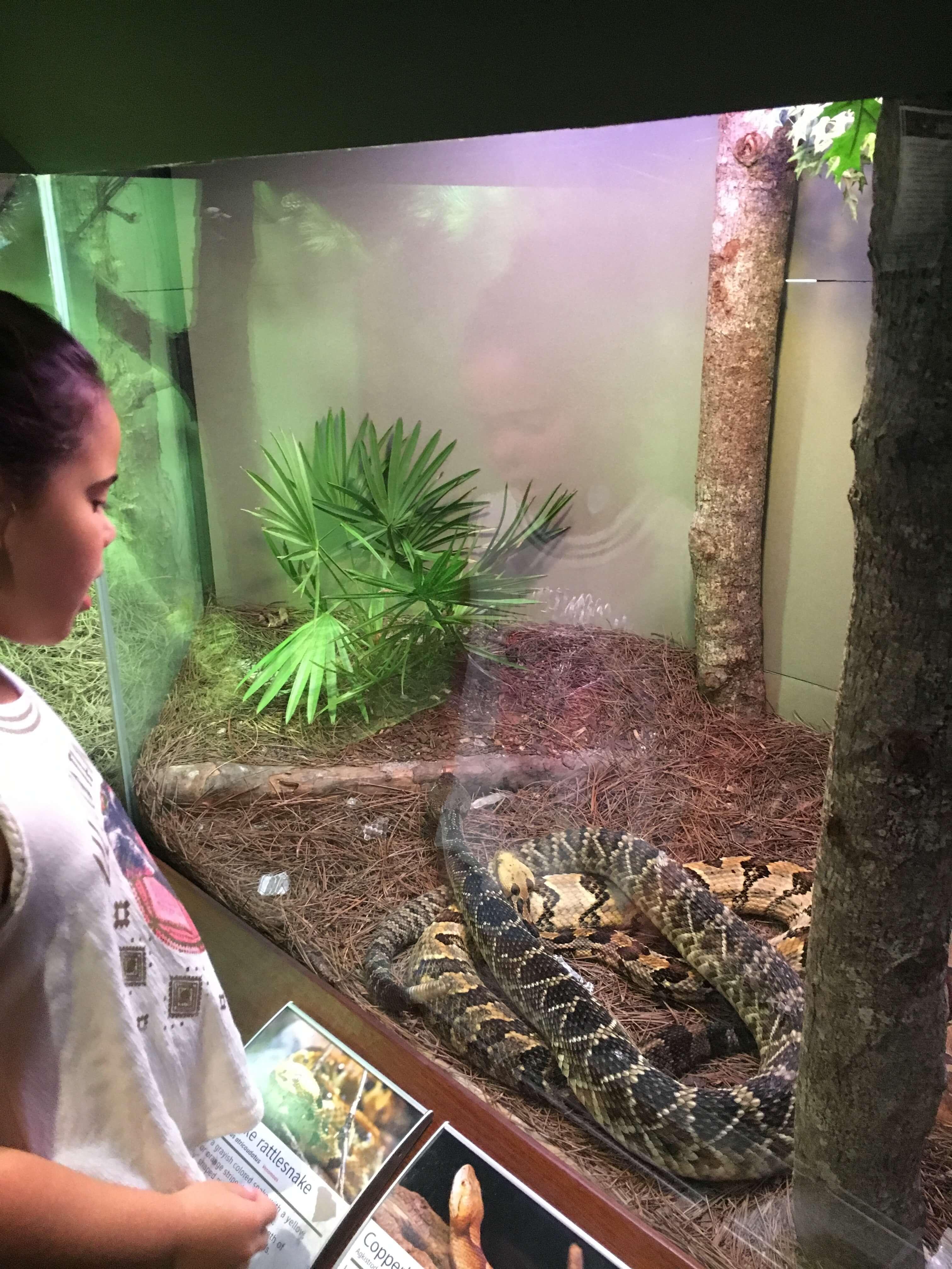 snakes at interactive fun South Carolina Aquarium