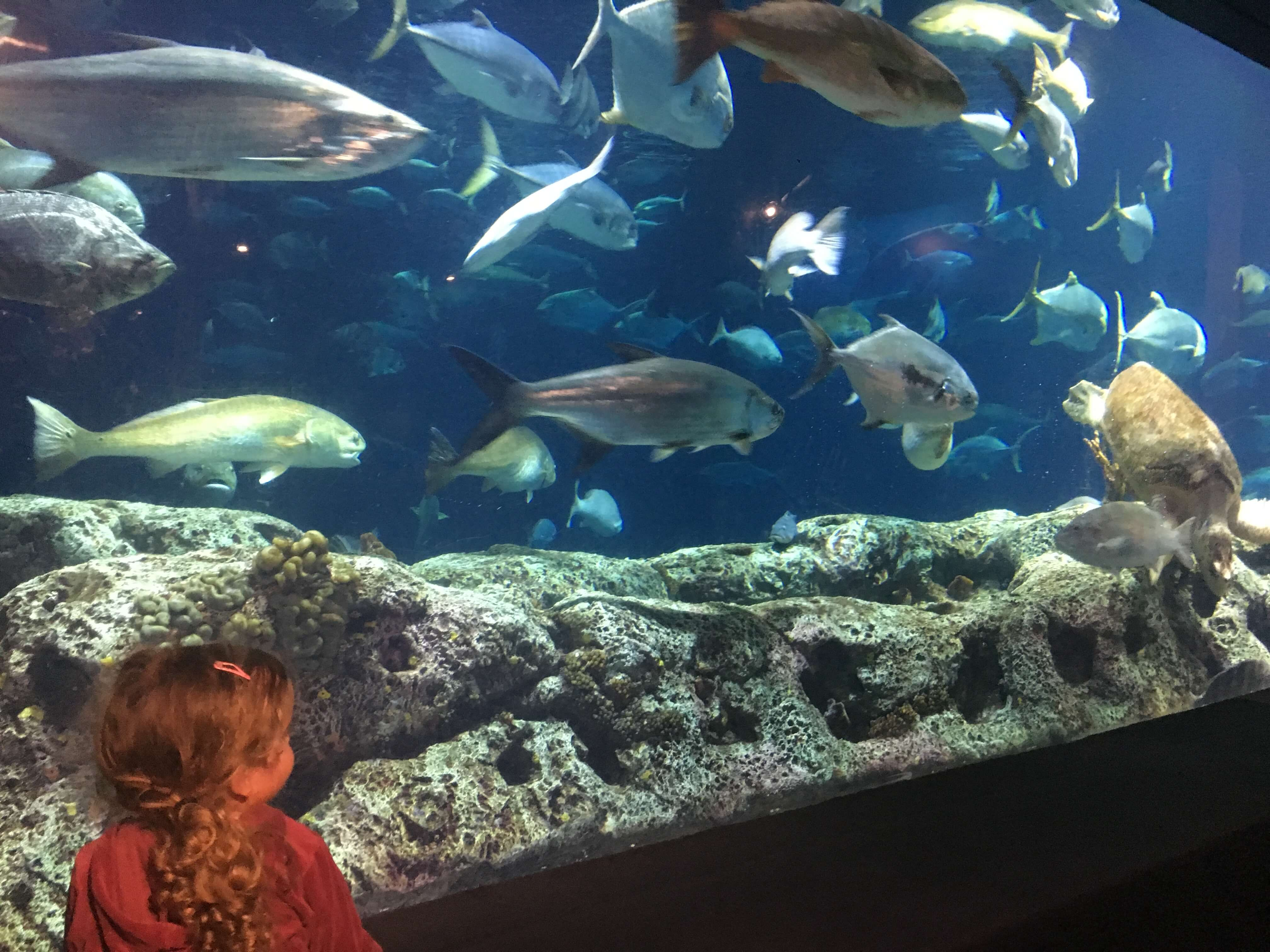 South Carolina Aquarium looking at fish