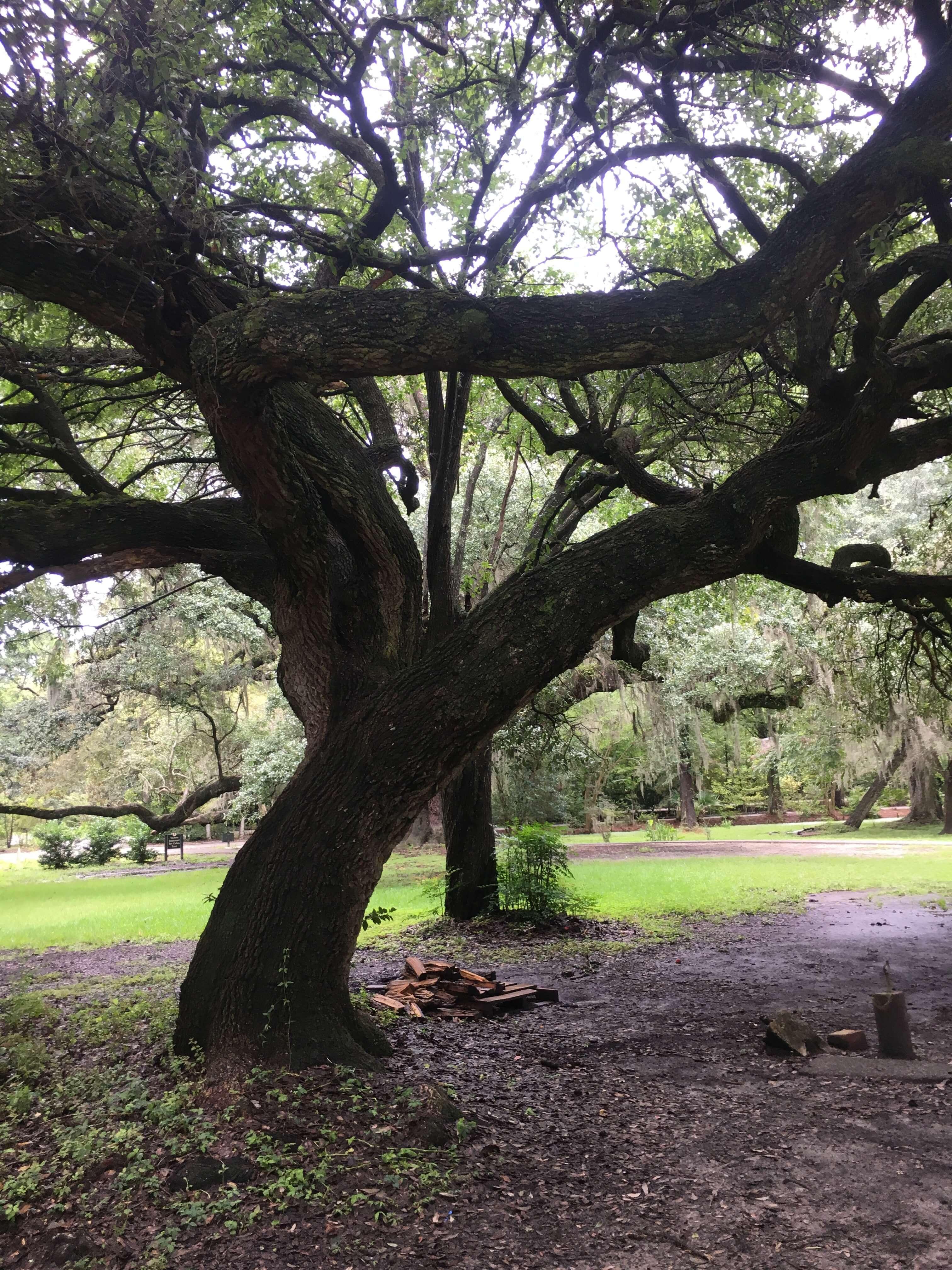 magnola gardens and plantation tour