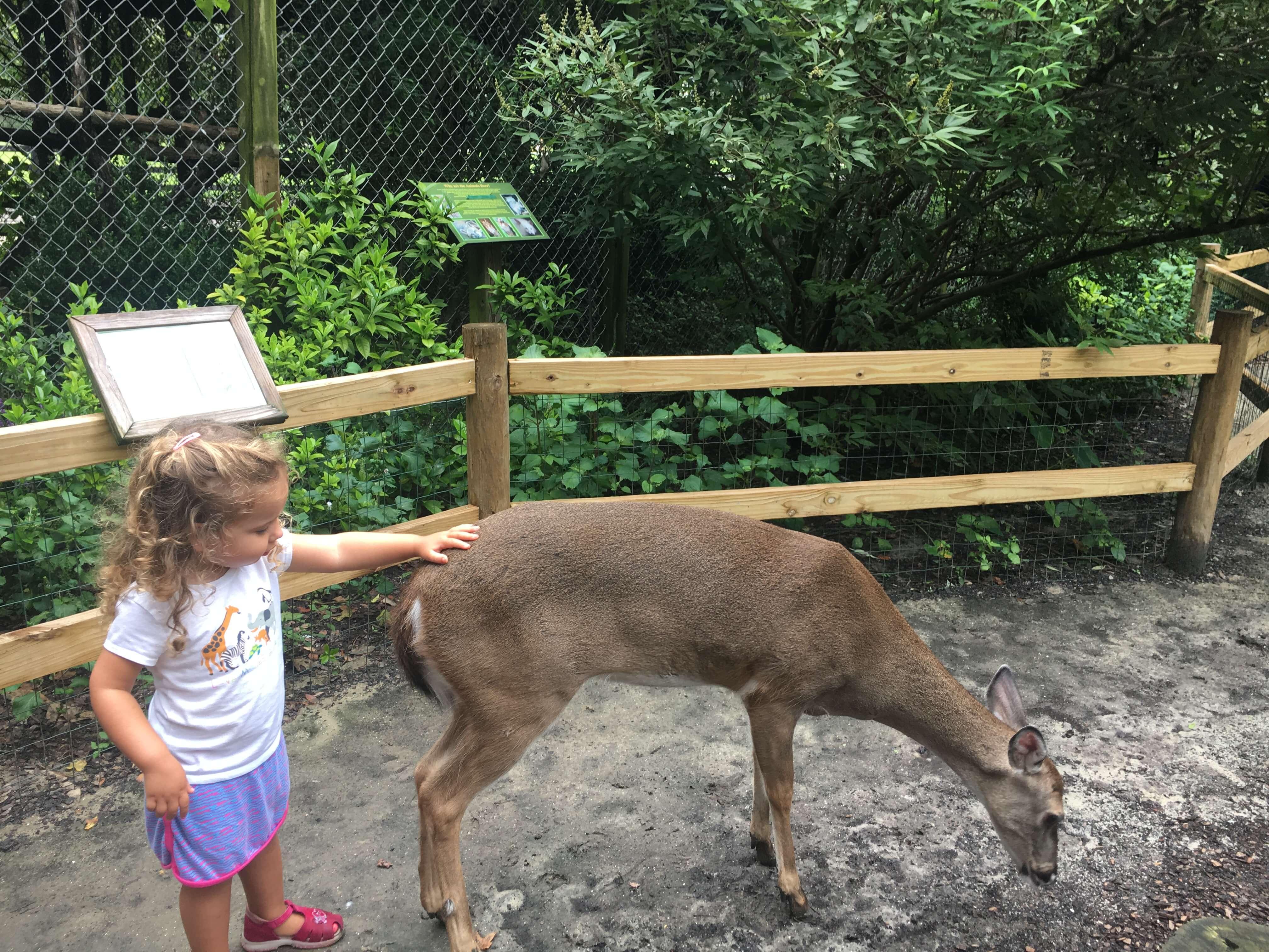 Magnolia Plantation and Gardens petting deer