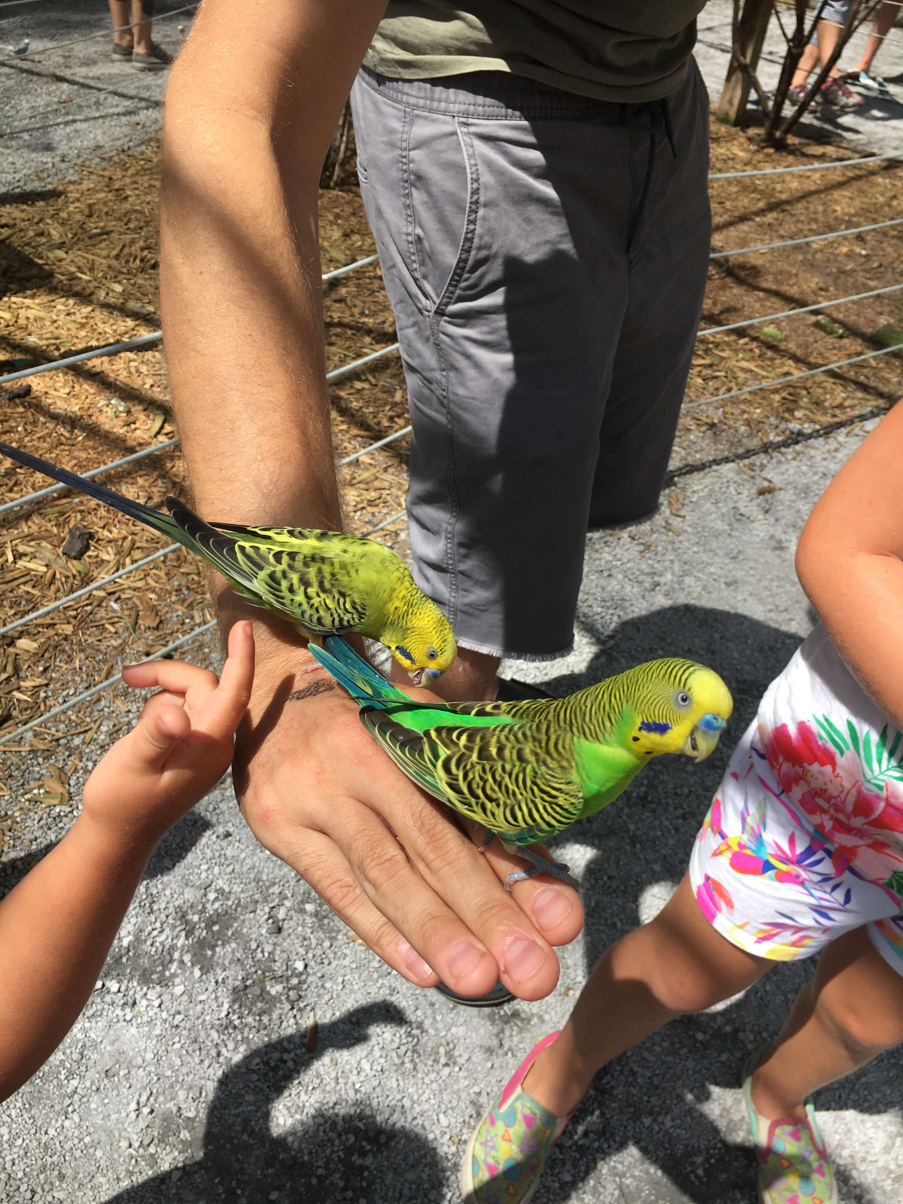 birds at bee city zoo charleston with kids