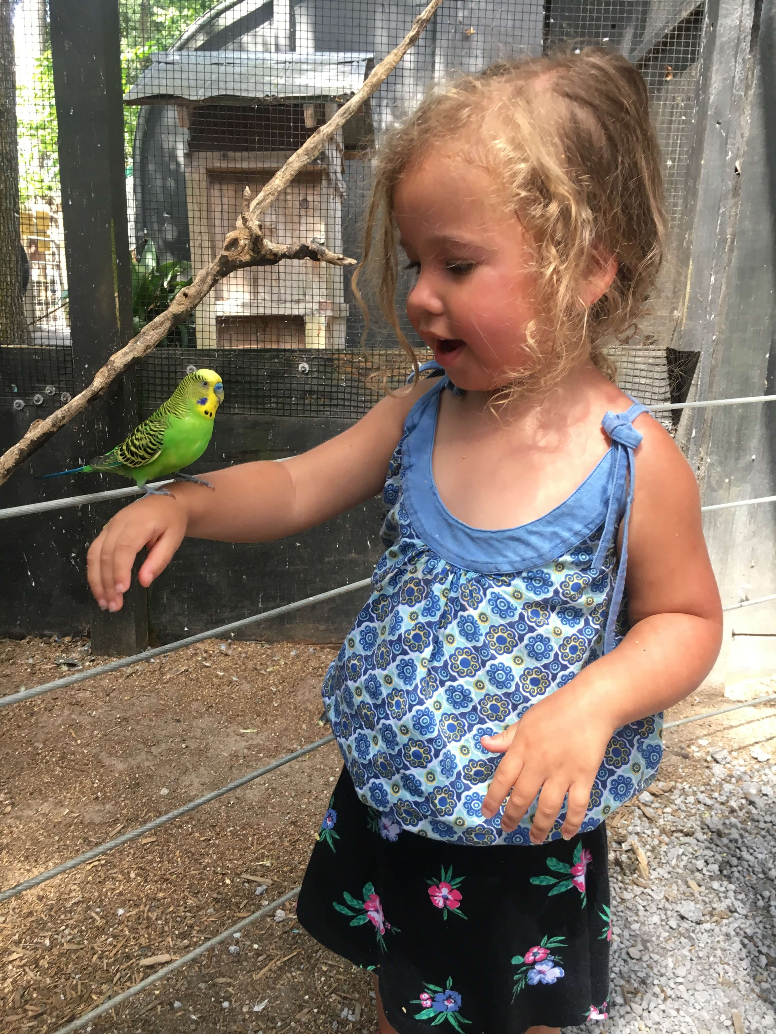 Bee City Zoo charleston with kids