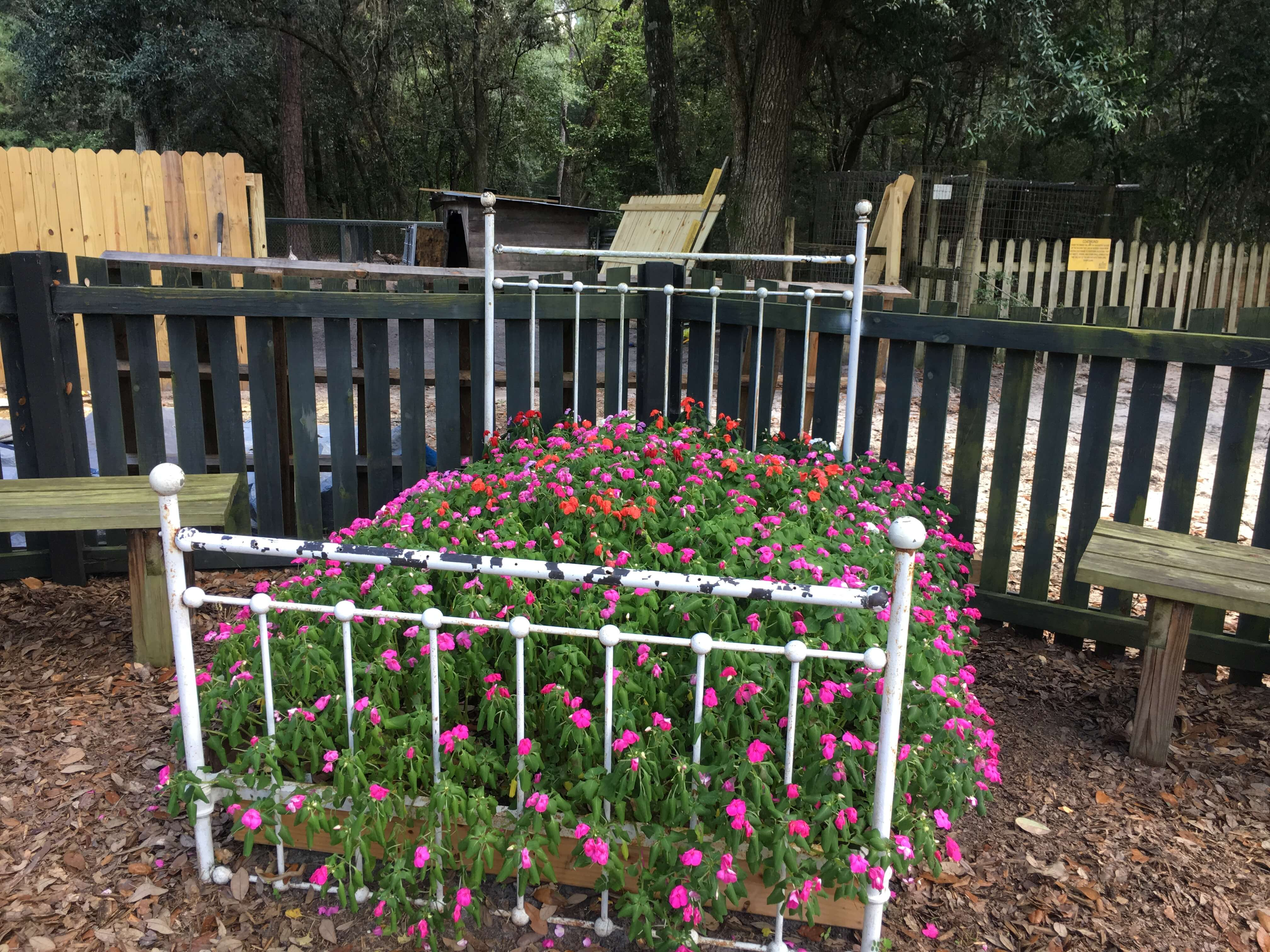 flower bed at bee city zoo charleston with kids