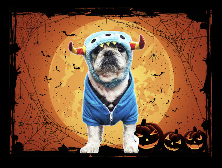 Howl-o-ween Bark Block Party & Fundraiser
