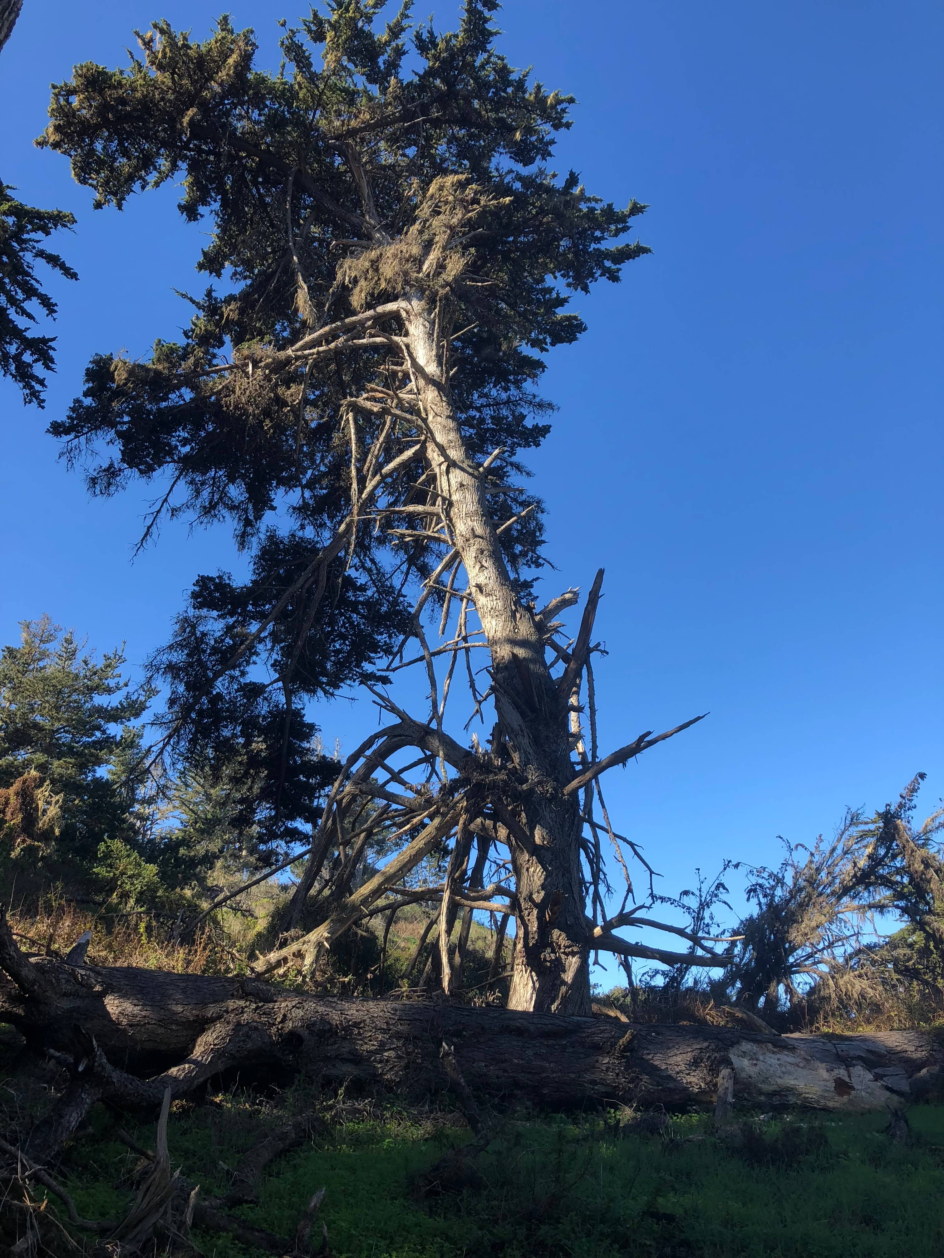Point Lobos State Reserve carmel-by-the-sea