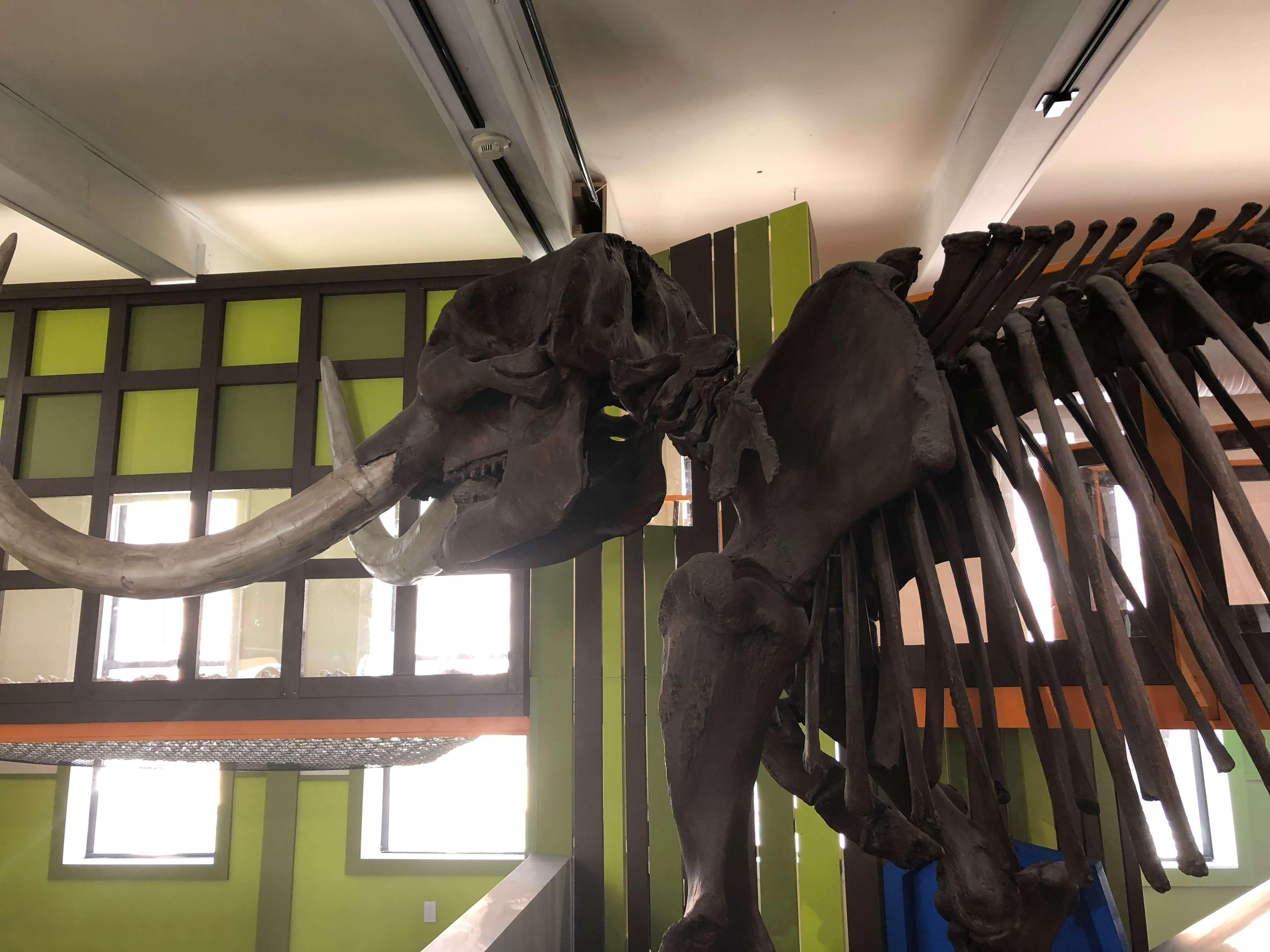dinosaur area Mid-Hudson Children's Museum