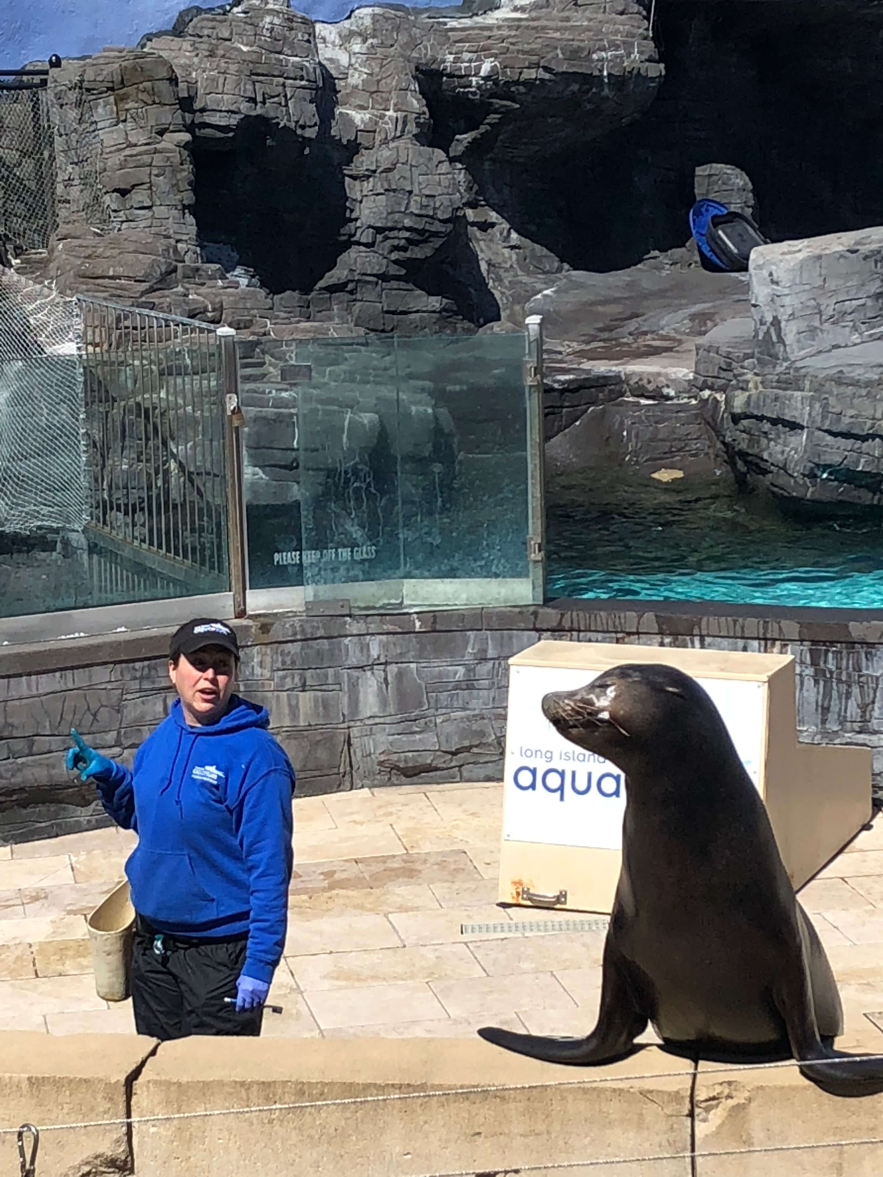 sea lion show at the long island aquarium