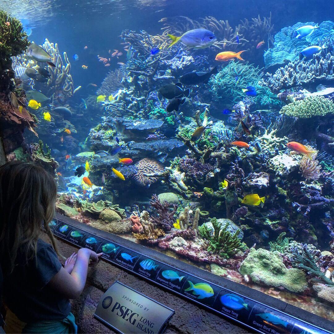 Long Island Aquarium activities in the north fork