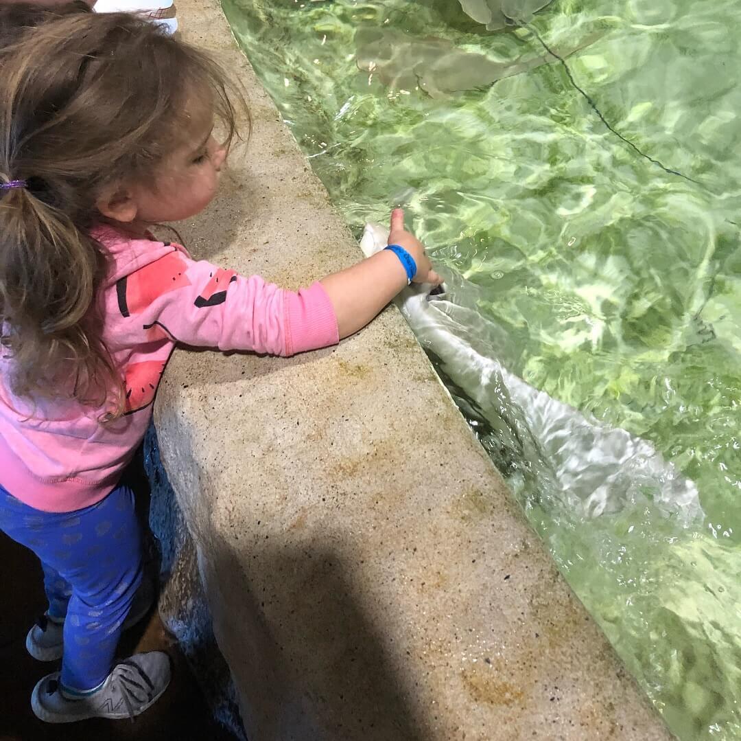 sting ray tank at the long island aquarium north fork