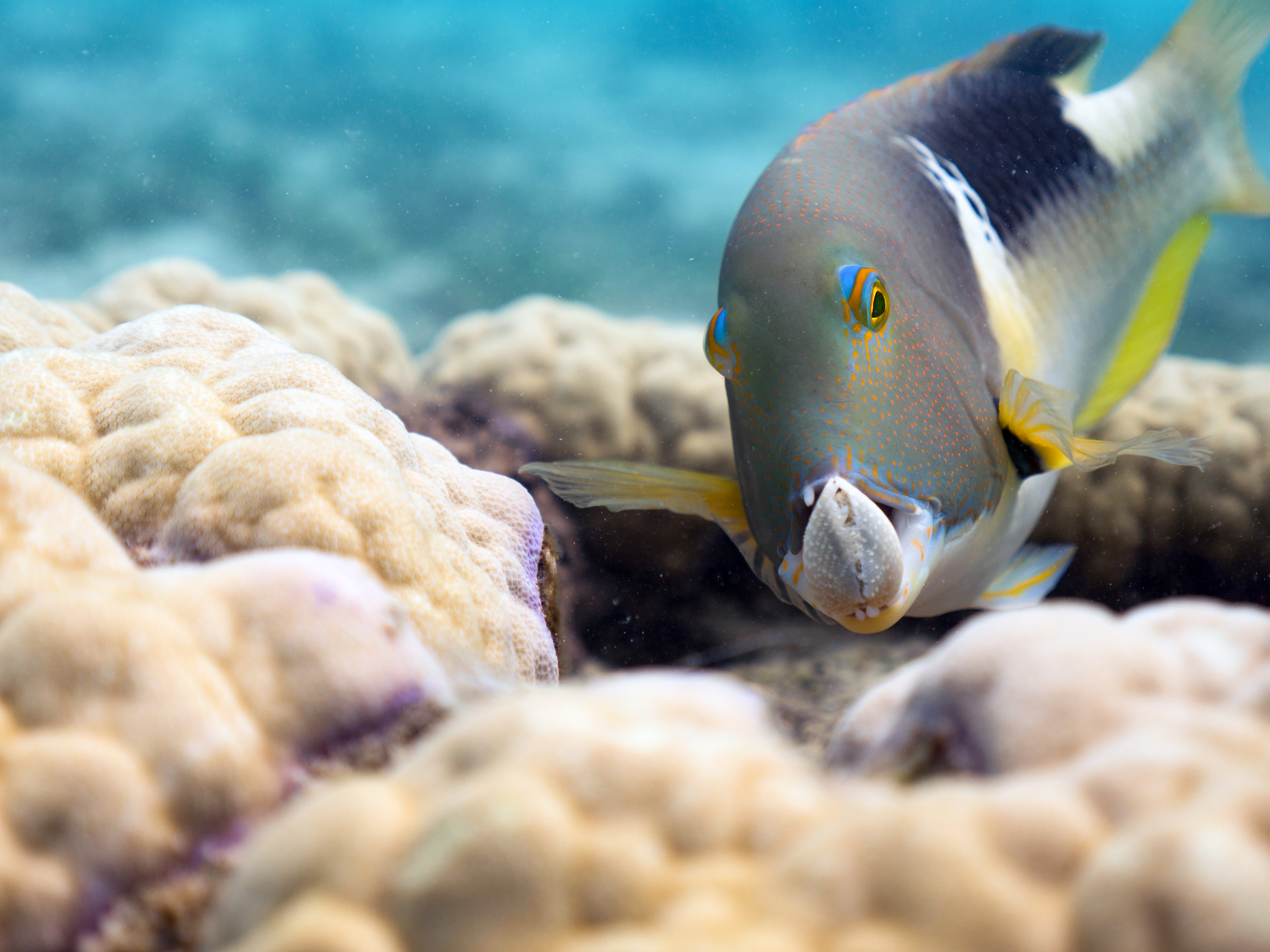 """New 3D Film """"Oceans: Our Blue Planet"""" at American Museum of Natural History"""